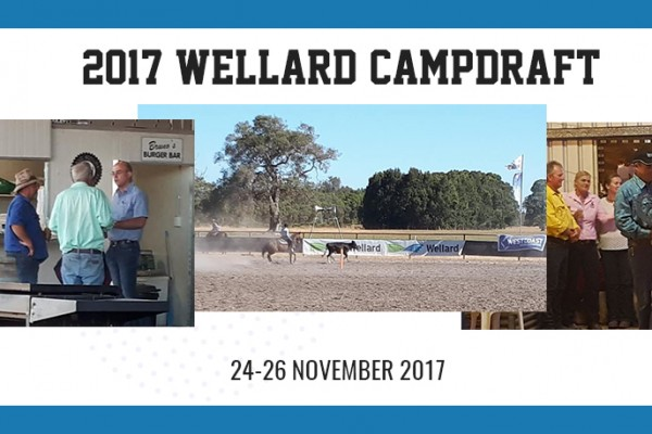 Wellard-Campdraft-web-pic